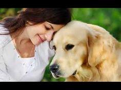 Curiosidades científicas sobre los perros