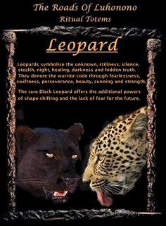 A párduc totemállatnak erős és védelmező jelenléte van. Ha ez a teremtmény a te totemállatod, akkor egy heves és agresszív védelmező áll melletted. A párduc a bátorság, erő és hősiesség szimbóluma. A párducot gyakran a Nappal is összekötik, szoláris rezgései vannak egyes kultúrákban (Dél és Közép-Amerikában).   A párduc totemmel rendelkező egyének általában olyan emberek, akik spirituális tudással jöttek erre a világra – egy mélyebb megértéssel a spirituális dolgok iránt. Ezek az emberek…