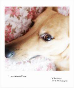 Art Photography, Corgi, Animals, Fine Art Photography, Corgis, Animales, Animaux, Animal, Animais