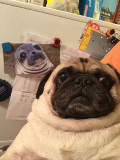 """What do you mean I look like the picture of the seal on the fridge?"""