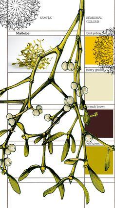 Planet Sam: Colour from the season - Mistletoe yellow Botanical Flowers, Botanical Art, Botanical Illustration, Sketch Painting, Painting Workshop, Winter Painting, Colour Pallette, Nature Journal, Season Colors