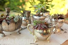 Potting up Succulents in Vintage Silver teapots, creamers and other containers.  GardenTherapy.com....pretty.