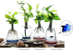 I can do this lol ~T   #Ecosistemas Aqua: #regala ecosistema simbiótico de mínimo mantenimiento $34,95 €