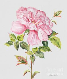 New print available on plout-gallery.artistwebsites.com! - 'Floral Botanicals-jp3779' by Jean Plout - http://plout-gallery.artistwebsites.com/featured/floral-botanicals-jp3779-jean-plout.htmlNone
