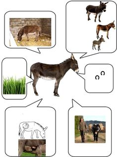 Farm Activities, Animal Activities, Farm Animals, Animals And Pets, Theme Nature, Farm Unit, All About Animals, Farm Theme, Animal Projects