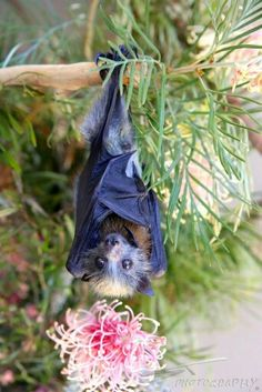 pretty place to hang around, love bats so good for the environment! Animals And Pets, Baby Animals, Funny Animals, Cute Animals, Mundo Animal, My Animal, Beautiful Creatures, Animals Beautiful, Bat Flying