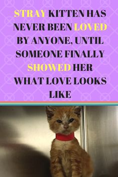 A Heartwarming Rescue Story Follow Us For More Cats And Kittens