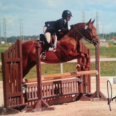 Rob says this horse looks terrific. Click to find out what he has to say about his rider.