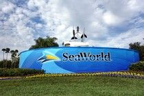 """The 5 Dumbest Things SeaWorld Has Done In Response To """"Blackfish"""" (So Far)"""