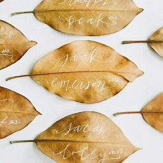 leaf place cards
