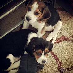 These two puppies are proudly featured in our Huggable Hall of Fame! To submit pet pics of your firry friend, use #PetcentricHugs on Instagram or visit Petcentric.com.