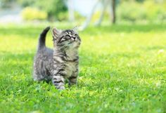 15 Cats That Are Just Enjoying The Green Grass Outdoors