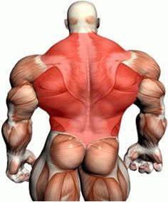 how to build a wide back, back workout routines for men