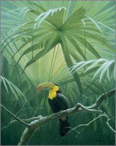 Robert Bateman - Under the Canopy - Toucan: ART galleryone.com