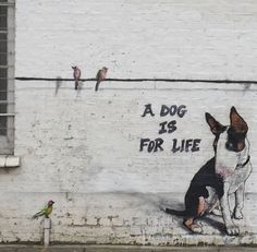 """""""A dog is for life"""" - Teddy Baden"""