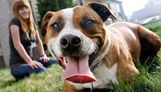 Best Friends Animal Society: Sanctuary Animals ... no kill shelter - check out animals for adoption