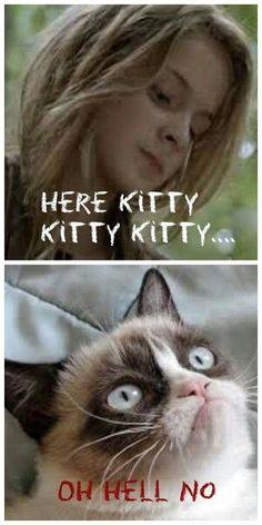 I think Grumpy Cat met his match. The Walking Dead Run Grumpy cat that is one crazy bitch. Walking Dead Funny, Walking Dead Zombies, Fear The Walking Dead, Twd Memes, Funny Memes, Hilarious, Funny Sayings, Gato Grumpy, Stuff And Thangs