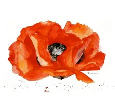 This poppy painting would brighten any room.