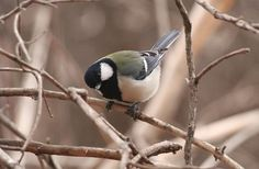 Και όμως! Ακόμα και τα πουλιά έχουν... σύνταξη