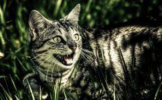 Massacre de gatos selvagens na Austrália | Momentos de Glória