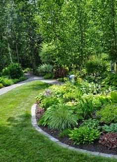 """On the perimeter of the birch trees is this part-shade bed where there are Heuchera, Hosta, Astrantia, Astilbe, Solomon's Seal, Lady's Mantle and Sedge grass."""
