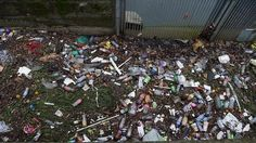 Litter bug: Rubbish along the Cooks RIver ... a container deposit scheme would reduce waste in the environment, the groups say.