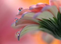 Krople wody na płatkach kwiatu Just Dream, Water Drops, Macro Photography, Nature Pictures, High Definition, Thinking Of You, Detail, Wallpaper, Movie Posters