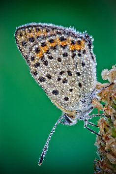 Macro Photographs by DAVID CHAMBON    Over the past few months photographer David Chambon has been working on a phenomenal series of photos featuring insects covered in morning dew.