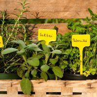 Top 8 Ways To Increase Your Growing Space