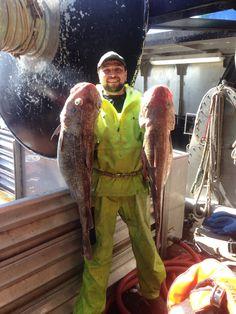 Cod fish... Alaska Fishing, Cod Fish, Fishing, Cod, Cape Cod, Atlantic Cod