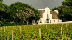 Groot Constantia Sauvignon Blanc named best in world Sauvignon Blanc, Cape Town, Picture Show, Around The Worlds, Wine, House Styles, Pictures, Instagram, Photos