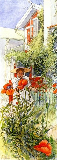 Poppy by Carl Larsson - poppies are such strange creatures - they bloom for a week at best.  But oh, the beauty when you look inside the flower - such deep, deep colours.