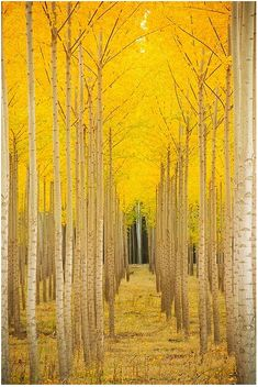 Yellow #fall #foilage
