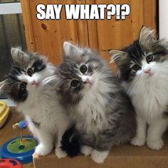 What a fab little trio!