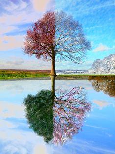 four_seasons_tree_by_atm_artwork.jpg (900×1201)