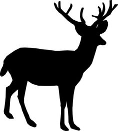 Pin baby raccoon coloring pages on pinterest - Applique Deer On Pinterest Deer Silhouette Deer And