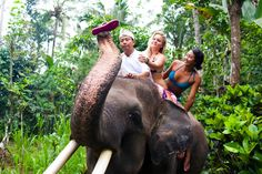 Ride an elephant through the jungle...So want to do this!