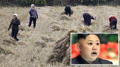(adsbygoogle = window.adsbygoogle || []).push();   La ONU ha emitido un informe especial en el que alerta que la sequía que padece Corea del Norte, la más grave desde 2001, puede aumentar drásticamente la malnutrición y pone en riesgo la vida de miles de sus habitantes. Así, la...
