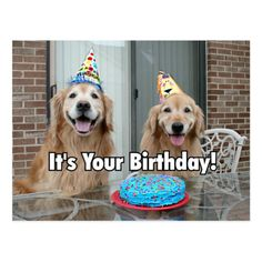 Shop Golden Retriever Happy Birthday Cake Postcard created by AugieDoggyStore. Personalize it with photos & text or purchase as is! Happy Birthday Animals, Happy Birthday Dog, Happy Birthday Quotes, Happy Birthday Images, Animal Birthday, Happy Birthday Cards, Birthday Cake, Birthday Wishes, Blue Birthday