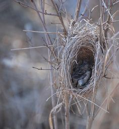 ~ nest with leaves inside