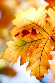 The colour of the leaves in autumn #makesmehappy @Blanca Carlson Prado Stuff UK