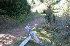 Dejamos la pista que va al ibón de Piedrafita para adentrarnos en la frondosidad del Betato