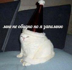Memes Humor, Man Humor, Cat Memes, Funny School Memes, Memes Funny Faces, Stupid Memes, Russian Cat, Russian Memes, Stupid Pictures