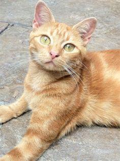 My cat Sassy. Judith, Warner Robins, GA - 2/26/2015