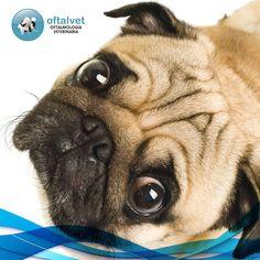 11 Ideas De Cuidados De Los Perros Perros Cuidado Con El Perro Veterinaria