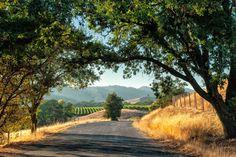 The Wine Wrangler: Savoring the Central Coast