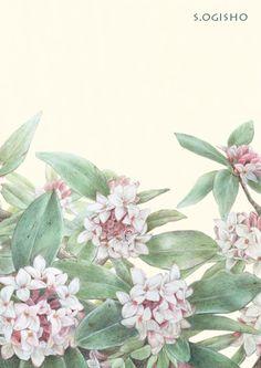 沈丁花 Chinese Painting, Theme Ideas, Botanical Prints, Colored Pencils, Florals, Tea Pots, Display, Fruit, Flower