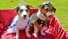 Jubilee Dogs! Don't tell the corgis: A pair of Jack Russell terriers dressed as the Queen and Prince Philip take a ride in their very own royal carriage
