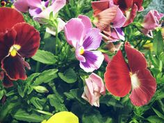 I love pansies. These are my mother-in-law's. #johnbogeman2