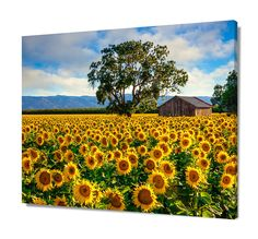 California Sunflower Country Charm Wall Decor
